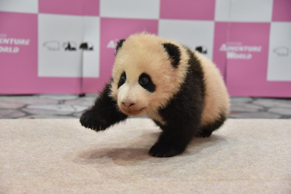 はやく会いたいにゃ 赤ちゃんパンダ!